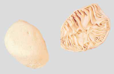 fancy-meat-bible