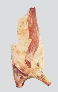 forequarter-and-flank-bone-in