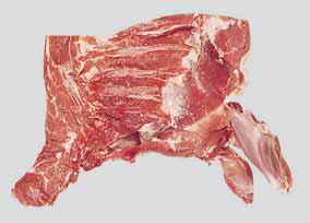 lamb-forequarter-for-export